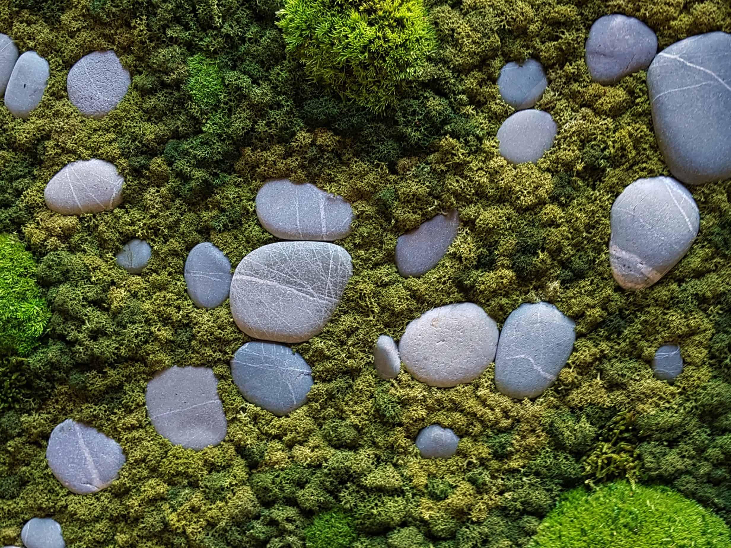 Moss Project Close Up Mos en steen