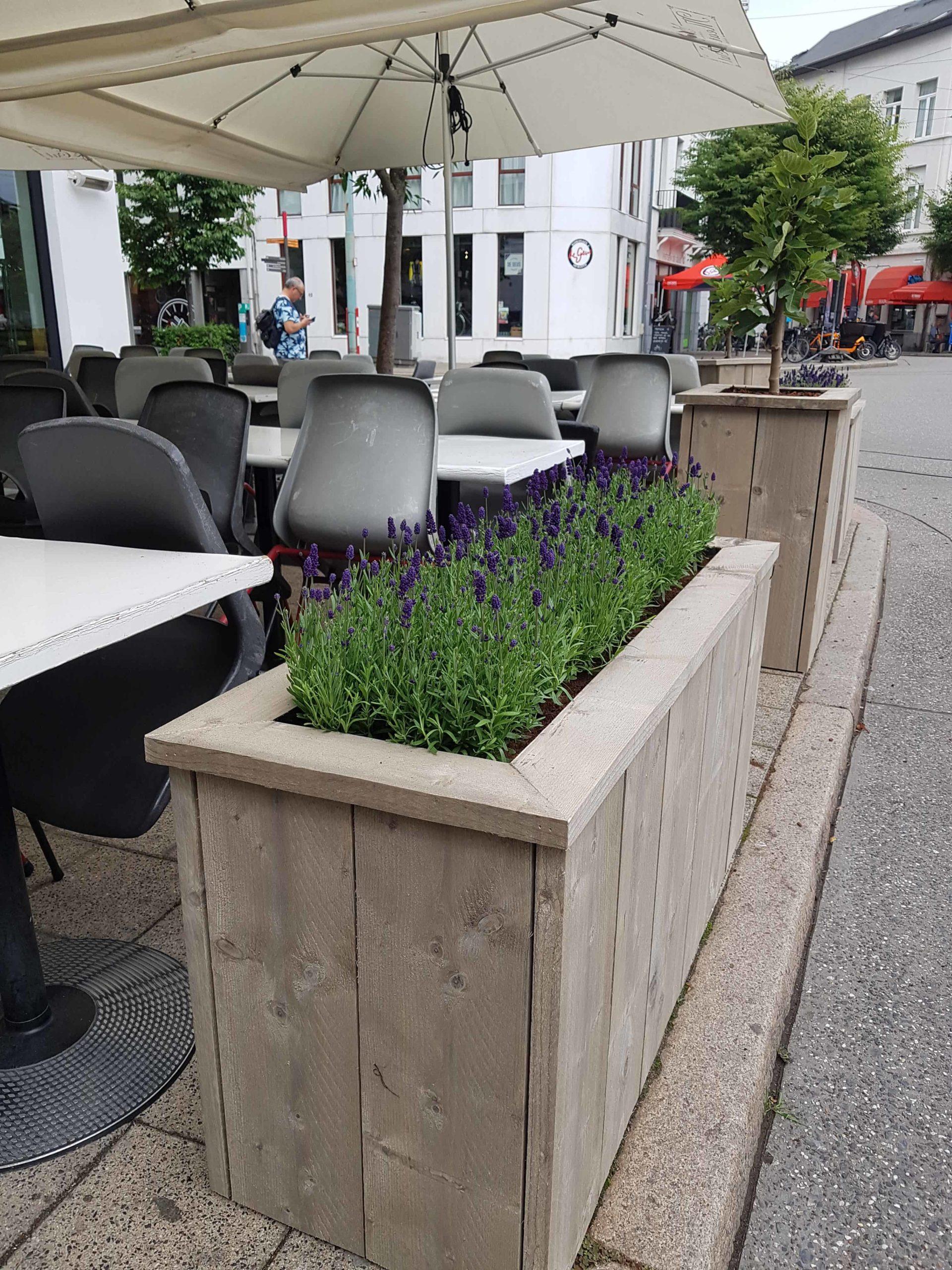 Plantenbak Lavendel